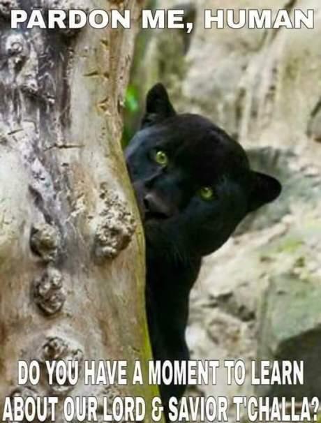 Panther Mormon